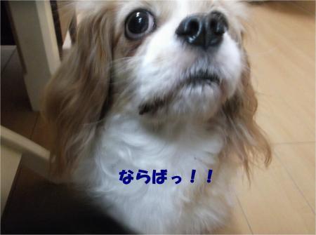 03_convert_20161202181904.jpg