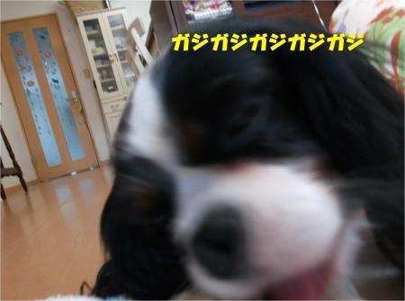 03_convert_20161215190026.jpg