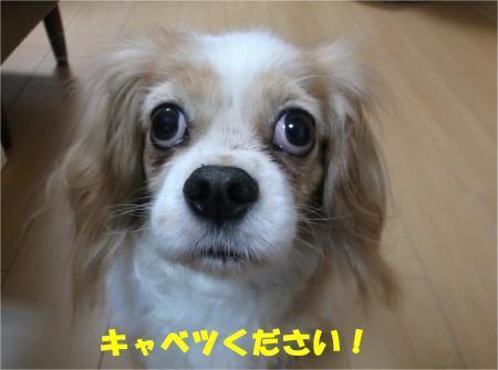 05_convert_20161201175550.jpg