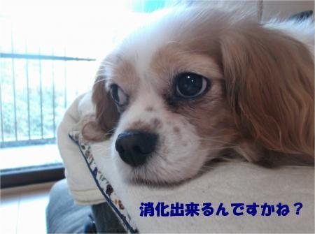 05_convert_20161215190046.jpg