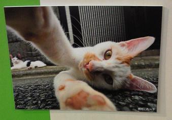 カメラにじゃれるネコ
