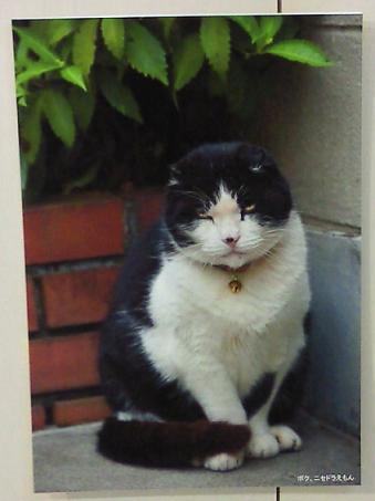 ニセドラえもん猫