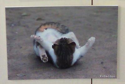 猫、すってんころりん