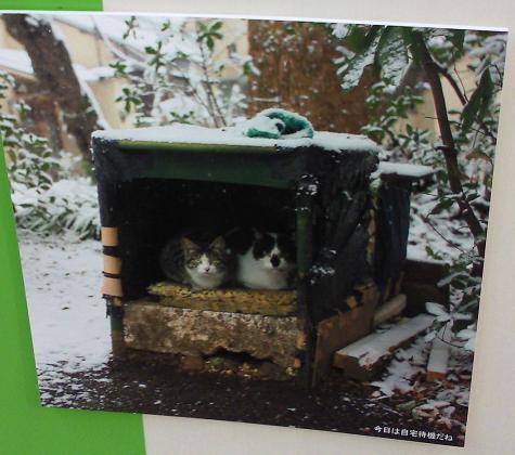 猫、自宅待機