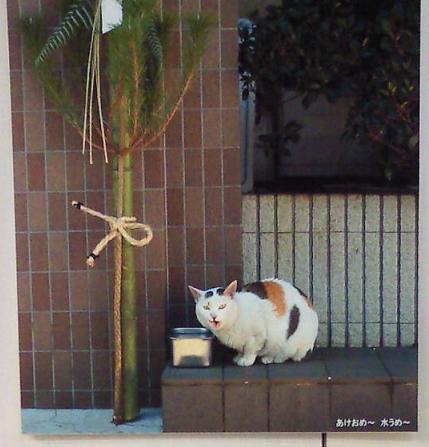 猫あけおめ~水うめ~