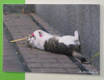 猫じゃらし、ひとりじめ