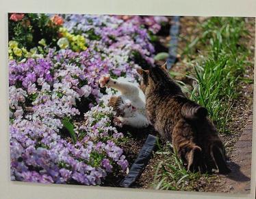 猫じゃれ合いIN花壇