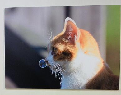 猫の鼻ちょうちん
