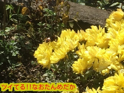 20161113195318d7c.jpg