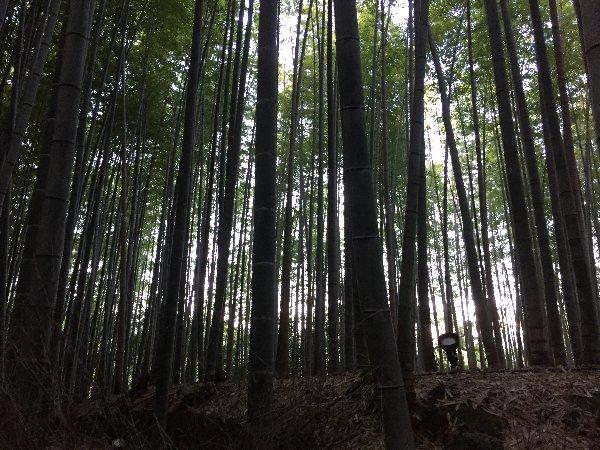 chikurin-arashiyama-006.jpg