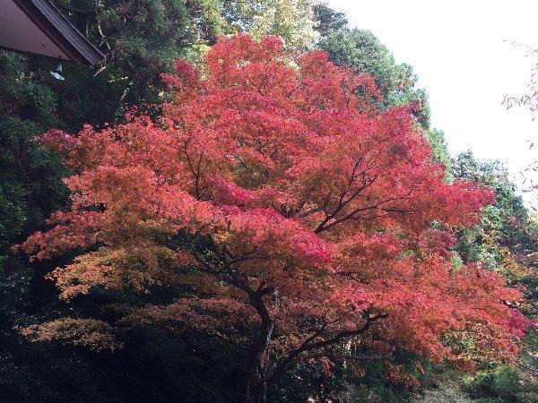 kuramatera-kyoto-159.jpg