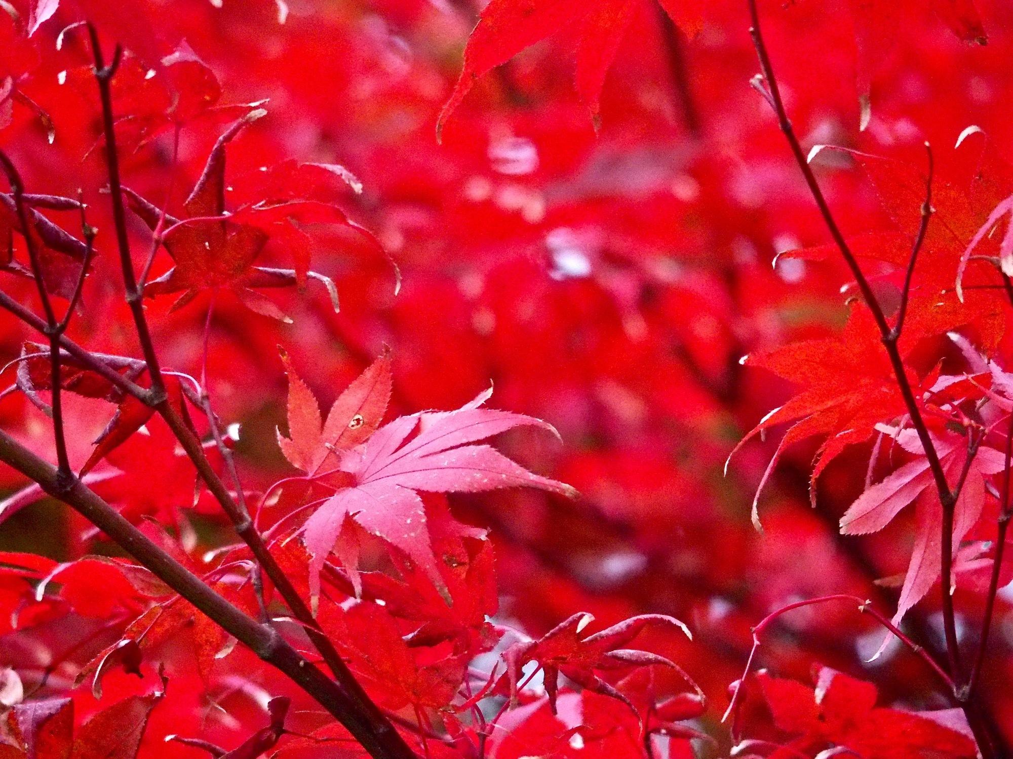 葉っぱが色づく季節です