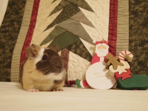 クリスマスのもんちゃん1