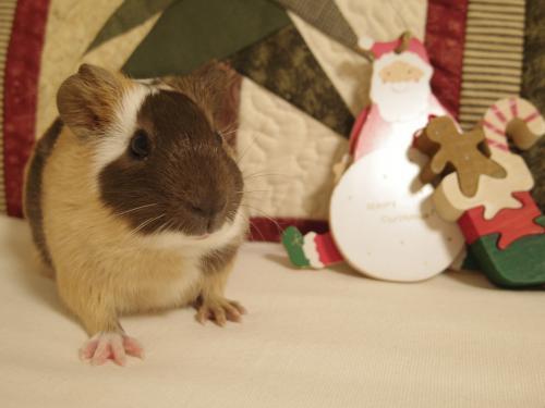 クリスマスのもんちゃん2