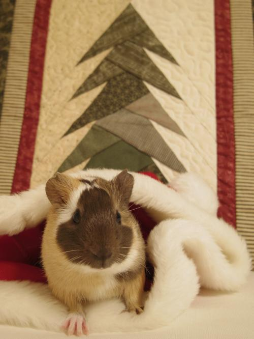 クリスマスのもんちゃん5