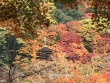 談山神社11月