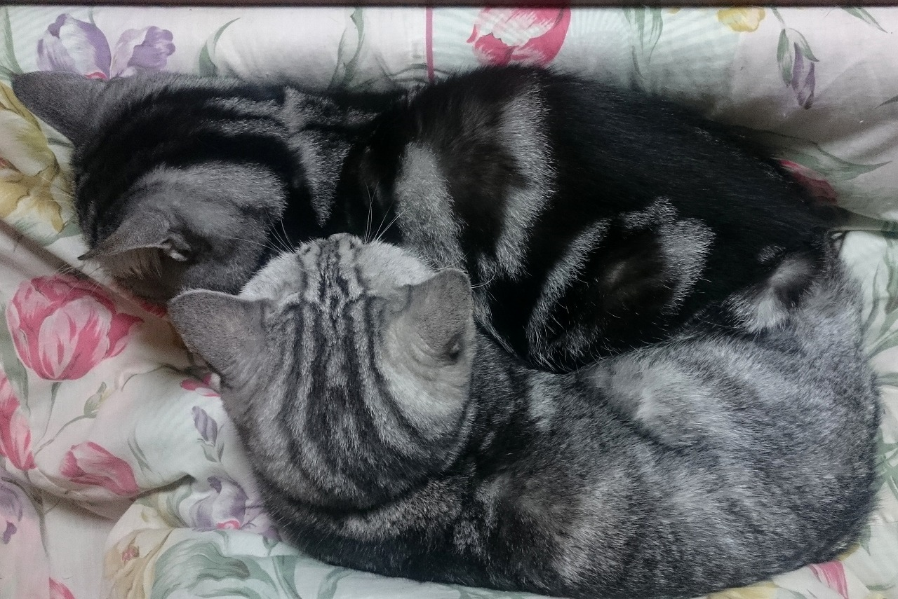 20161130-Cats-X02.jpg