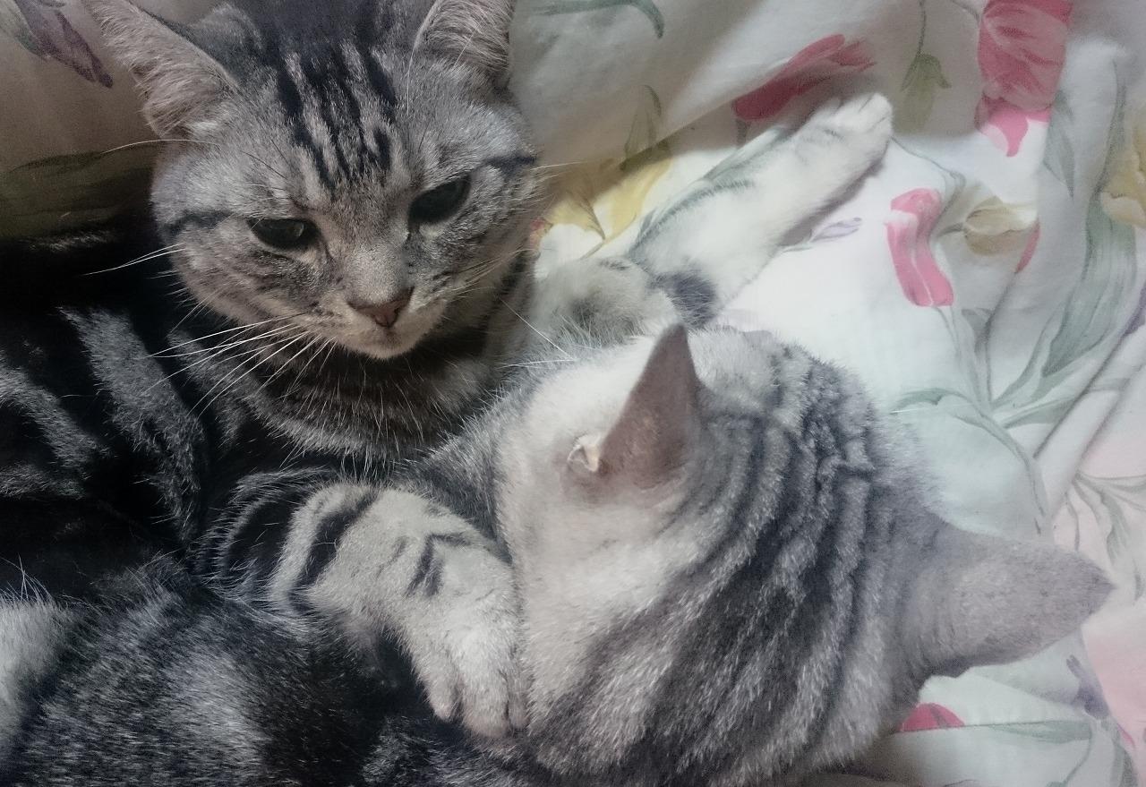 20161202-Cats-X01.jpg