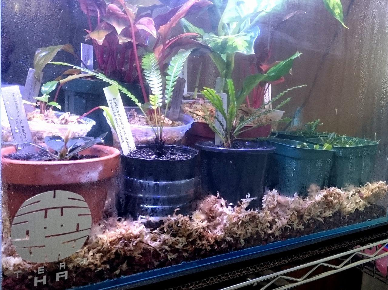 20170115-PlantsCage-X04.jpg