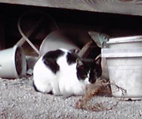 税理士事務所のご近所猫さん