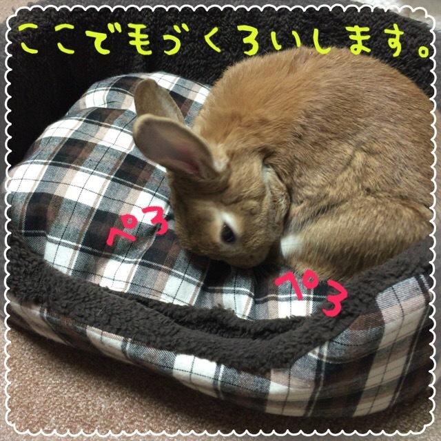 image4 (8)