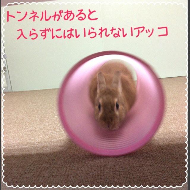 image2 (12)