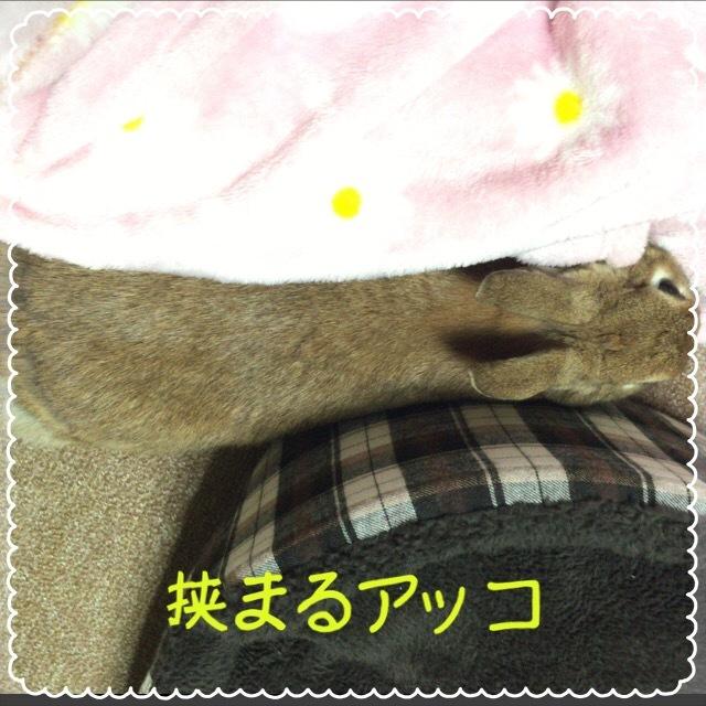 image3 (12)