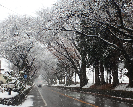 28_11_26 おとといの初雪 1