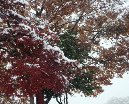 28_11_26 おとといの初雪 2