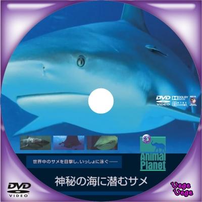 アニマル・プラネット 神秘の海に潜むサメ