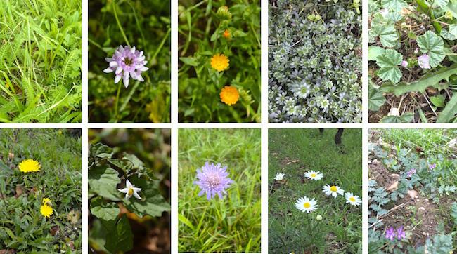 herbes10.jpg