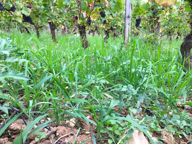 herbes2.jpg