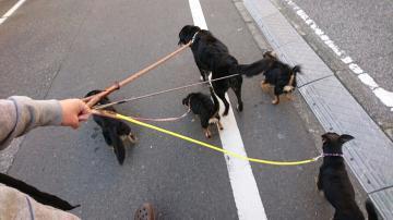 5頭の散歩リサイズ