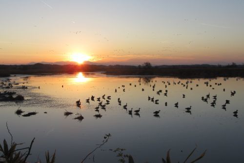 蕪栗沼の日没