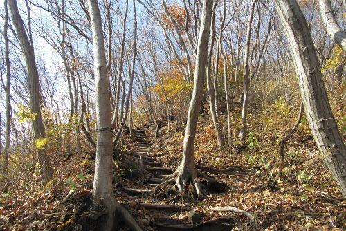 雑木林が広がる斜面