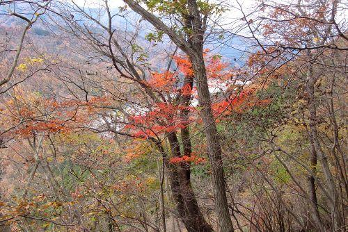 紅葉と宮ヶ瀬湖