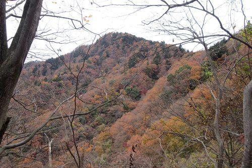 仏果山南斜面