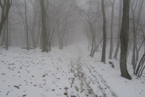 霧が出てきた