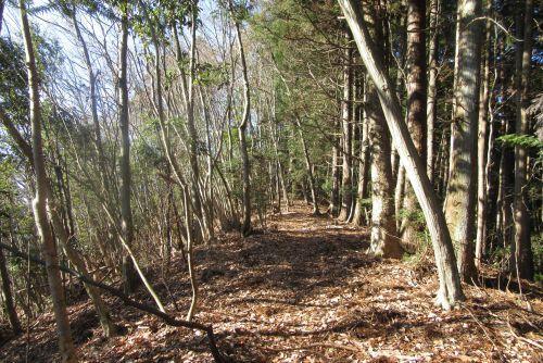 雑木林と人工林