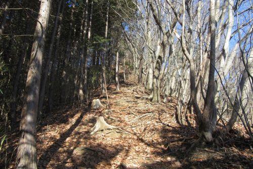 雑木林と人工林が入り交じる