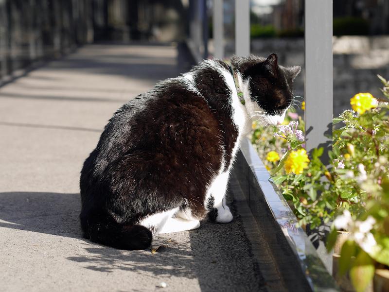 黒御影石と黒白猫2