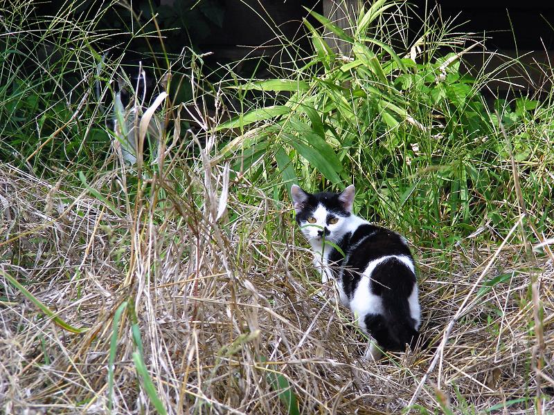 廃屋とブチ柄猫2