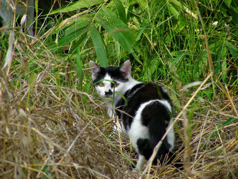 廃屋とブチ柄猫3