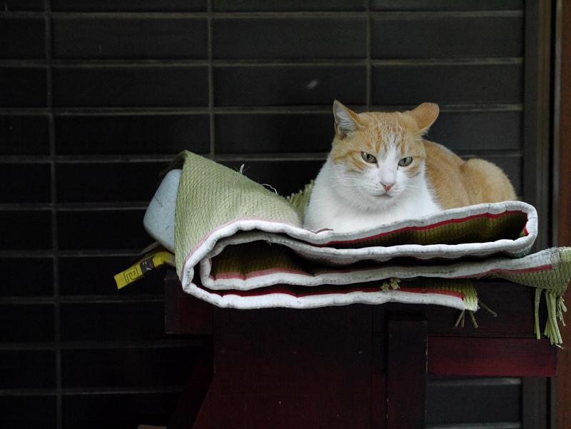玄関先の茶白猫1