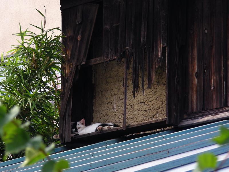 廃屋の屋根とブチ柄猫1