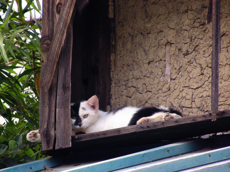 廃屋の屋根とブチ柄猫3