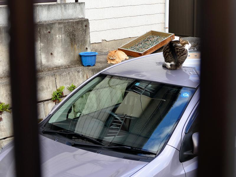 駐車場と猫たち1