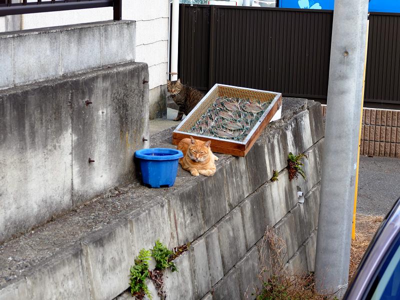 駐車場と猫たち2
