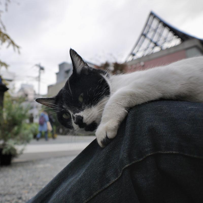 曇り空と膝に乗った白黒猫1