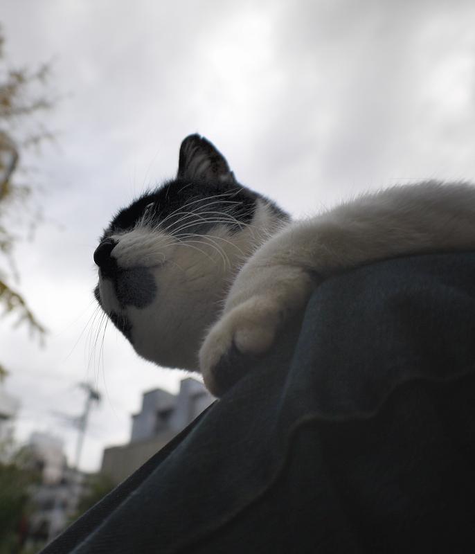 曇り空と膝に乗った白黒猫2